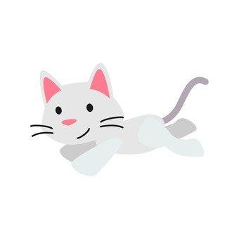 Cat - running cat