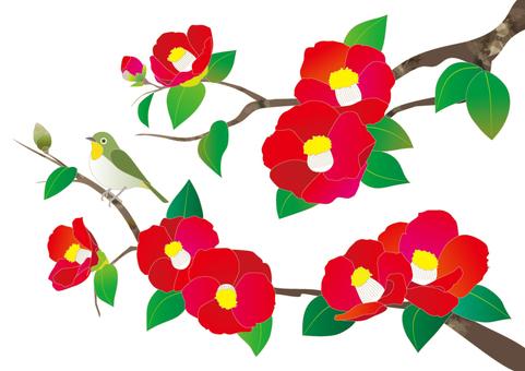 Camellia and mezzo