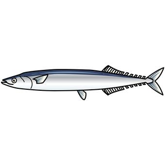 Illustration of fish-saury