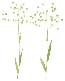 히메코반소우 / 잡초