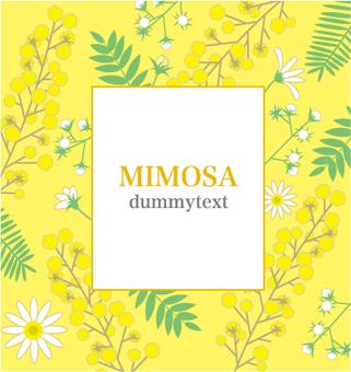 Mimosa - Flower 3-1