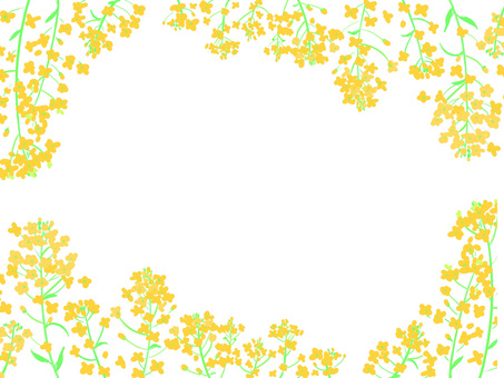 Whole rapeseed background