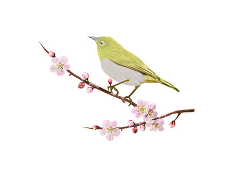 Plum and white-eye