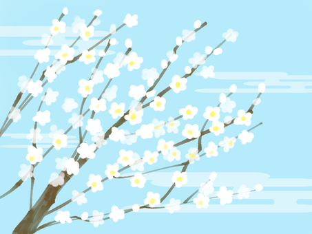 白色的梅花