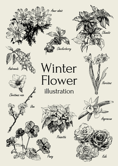 Winter flower illustration