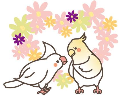 Little bird 07