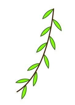 柳樹的葉子