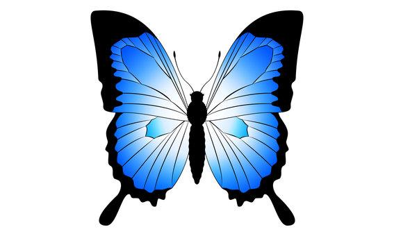 오오 루리 호랑 나비의 일러스트 03
