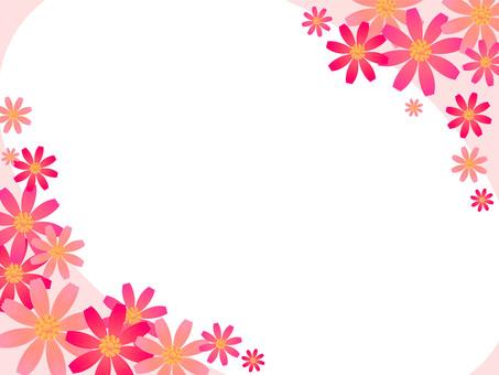 Cosmos flower frame
