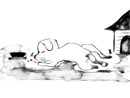 A nap of a dog (2561)