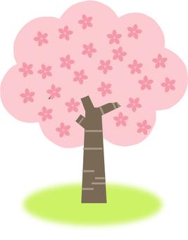 Cherry tree full bloom