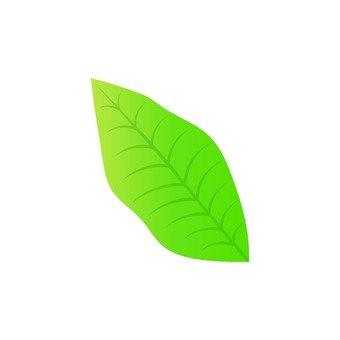 Oval leaf 4