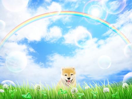 Grass Hakuzo Grass blue sky Puppy's Shiba Inu background