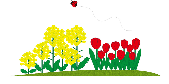 Tulip & rape blossom