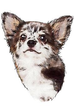 Dog's portrait 5