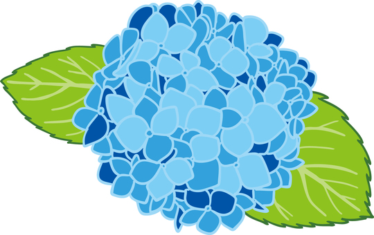 Hydrangea illustration background transparent ant
