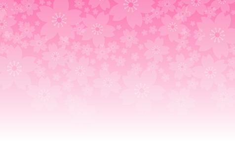 Cherry blossom material 04