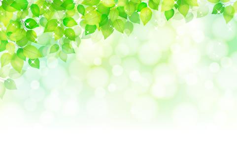 Fresh green 264