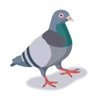비둘기 일러스트