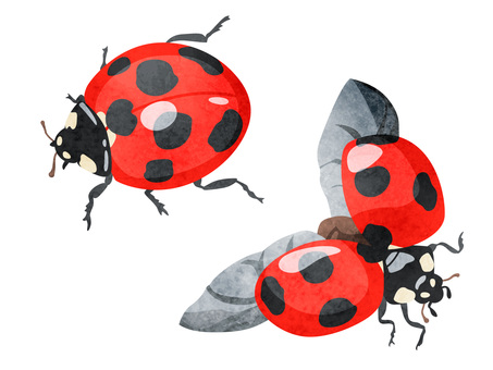 Animal _ Insect _ Ladybird _ Watercolor