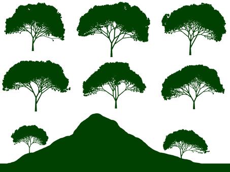 Tree illustration 57