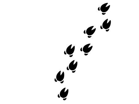 Wild boar footprint trace