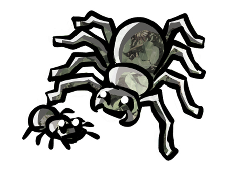 Spider parent and child