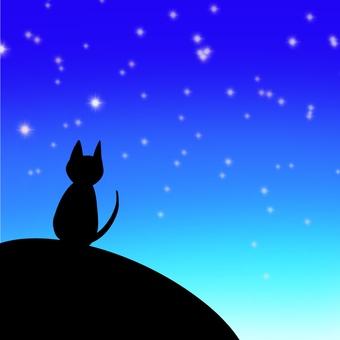 Cat watching the night sky