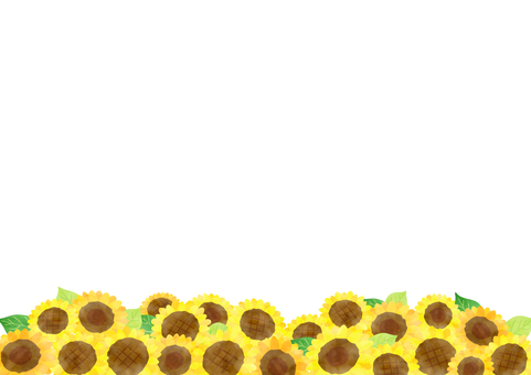 Sunflower background 3