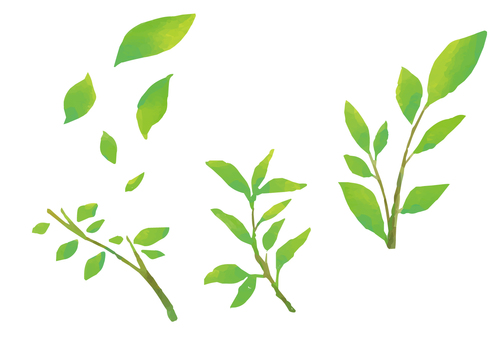 수채화 풍 신록 잎 그린