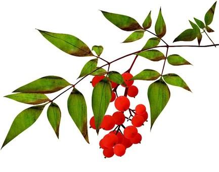 南部的水果