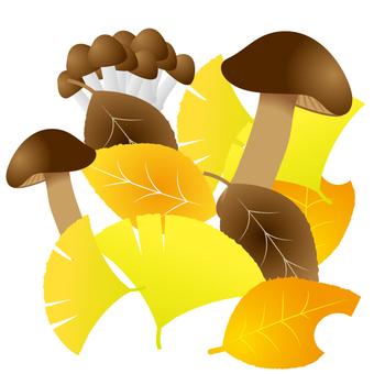 Dead leaves and mushrooms