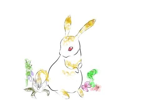 Rabbit, color
