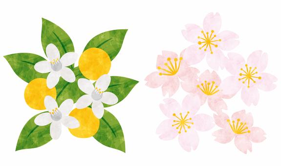Hinamatsuri / Sakura and Tachibana