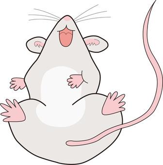 Rat laughing