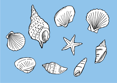 Seashell illustration set (background blue, no transparency)