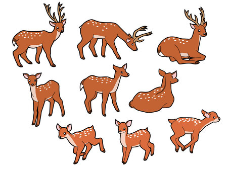 9 types of deer