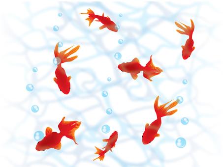 Goldfish _ wave 2