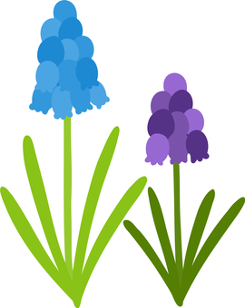 Cute hand-painted muscari