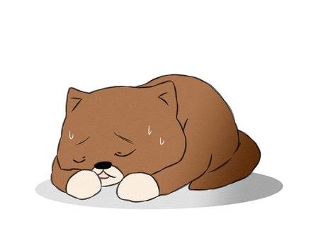 고양이 질병