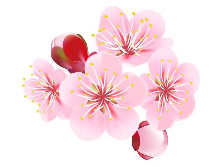 2017 _ plum blossoms _ 0002