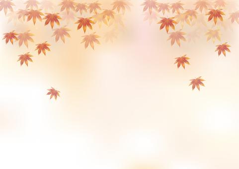 Autumn leaves 331
