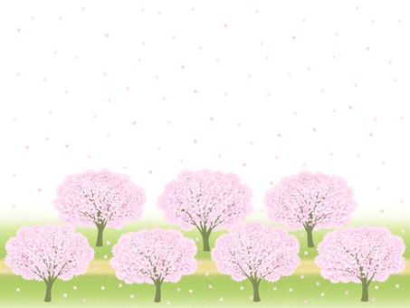 Cherry blossom path frame 01 (white background / transparent)