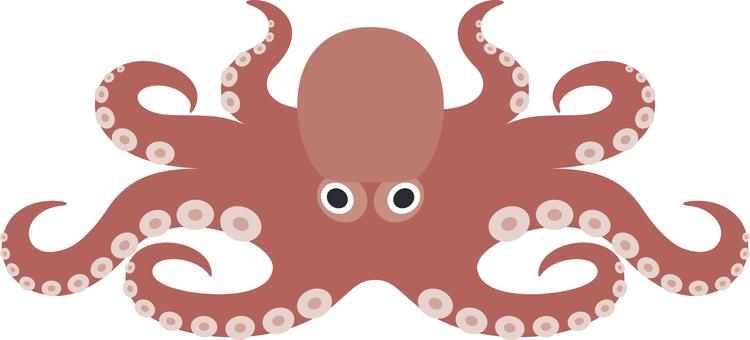 Octopus Seafood Seafood Seafood
