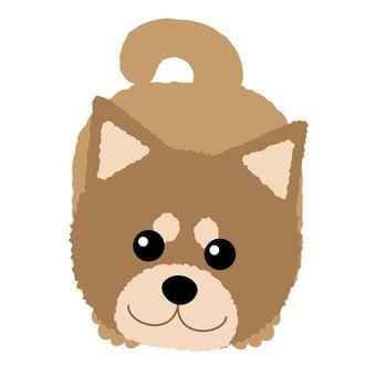 Shiba inu is cute