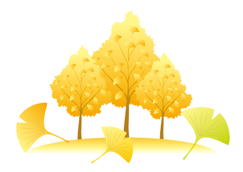 은행 나무 가로수