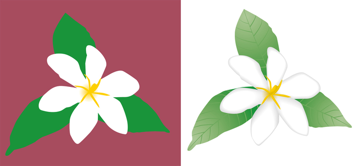 Gardenia (single bloom)