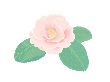 Pink camellia 1