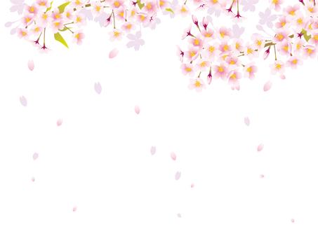 桜の花フレーム12