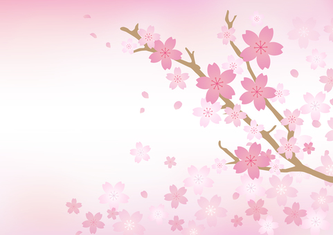 Cherry blossoms 48